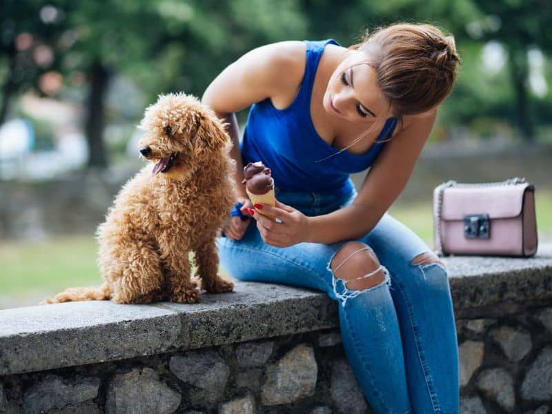Are Poodles Hypoallergenic?